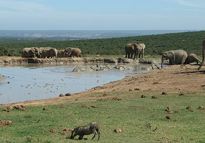 Addo Elephant National Park, attractions in Addo