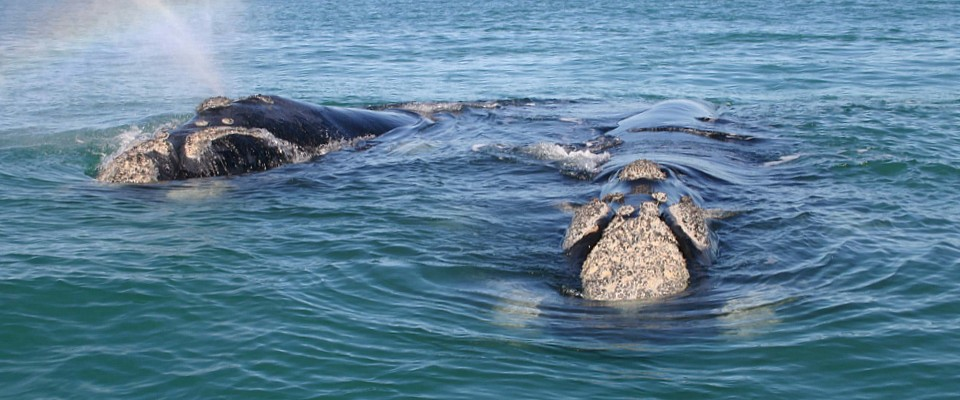 south-africa-whales-africa-adventure.jpg