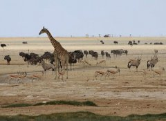 Flying safari to Etosha with Cross Country Air Safaris