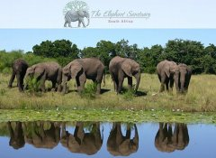 Elephant Sanctuary, wildlife & nature in The Crags