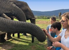 Feeding elephants at the Elephant Sanctuary in The Crags