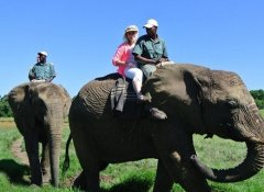 Riding elephants at the Elephant Sanctuary, The Crags
