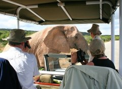Hitgeheim Country Lodge's safari in Addo Elephant Park