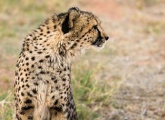 Zululand specialist Indigo Safaris offers game drives