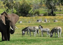 Game watching in Plettenberg Bay at Knysna Elephant Park