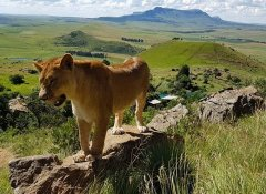 Love Lions Alive Sanctuary, Wildife in the Free State
