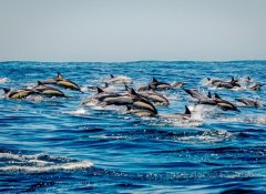 Dolphin watching in Knysna with Ocean Odyssey