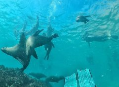 Offshore Adventures and swim with seals in Plett