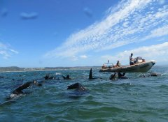 Offshore Adventures with the Robberg Nature Reserve seals