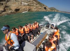 Offshore Adventures by boat to the Plettenberg Bay seals