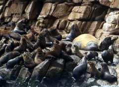 Offshore Adventures at the Robberg Peninsula seal colony