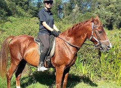 Perdepoort Horse Trails through fynbos and forests