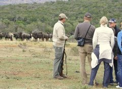 Guided tour and buffels at Pumba Game Reserve Safaris