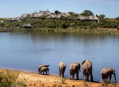Elefants on the lodge at Pumba Game Reserve Safaris