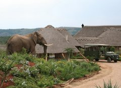 Elephant at Pumba Private Game Reserve's game lodge