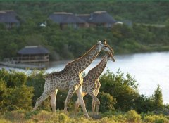 Pumba Private Game Reserve accommodation in Grahamstown