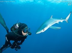 Shark Bookings's Blue and Mako shark diving at Cape Point