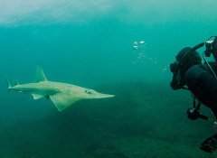 Shark Bookings offer shark diving in Mossel Bay and Durban