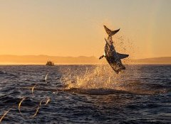 Experience Great Whites in Gansbaai with Shark Bookings