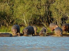 iSimangaliso hippo cruise with St Lucia Tours-Advantage