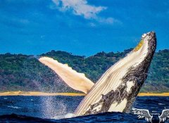 Whale watching with St Lucia Tours-Advantage & Charters