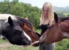 Horses of the 3 Sisters Horse Trails in Port Alfred