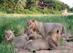 Traipsing Africa's Safaris and Tours in South Africa