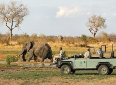 Traipsing Africa's Safaris in Kruger National Park