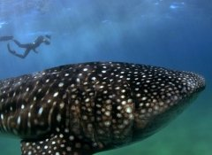 Triton Dive Charters and activities in Sodwana Bay