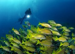 Scuba diving in Sodwana Bay with Triton Dive Charters