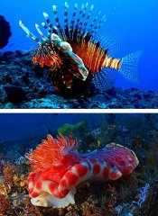 Triton Dive Charters at the 5 Mile reef in Sodwana Bay