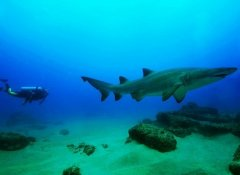 Shark diving in Sodwana Bay with Triton Dive Charters