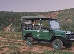 Game drive at Valley Bushveld Country Lodge in Addo