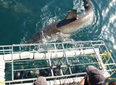 Shark cage diving with White Shark Diving Co in Gansbaai